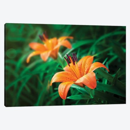 Tiger Lilies 3-Piece Canvas #JRP103} by Jonathan Ross Photography Art Print