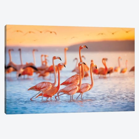 Wading Flamingos Canvas Print #JRP106} by Jonathan Ross Photography Canvas Wall Art