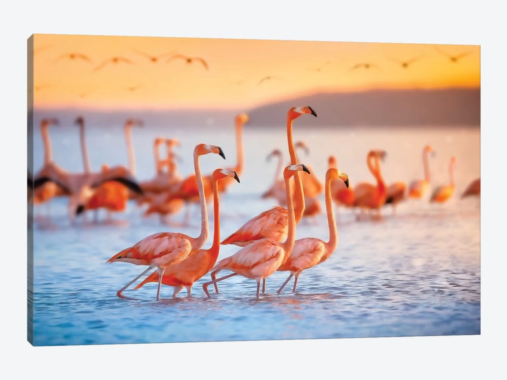 Wading Flamingos by Jonathan Ross Photography 1-piece Canvas Art