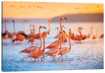 Wading Flamingos Canvas Art Print