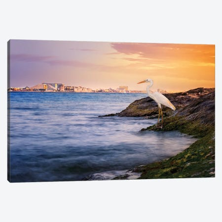 Cancun Coastline Egret Canvas Print #JRP10} by Jonathan Ross Photography Canvas Print