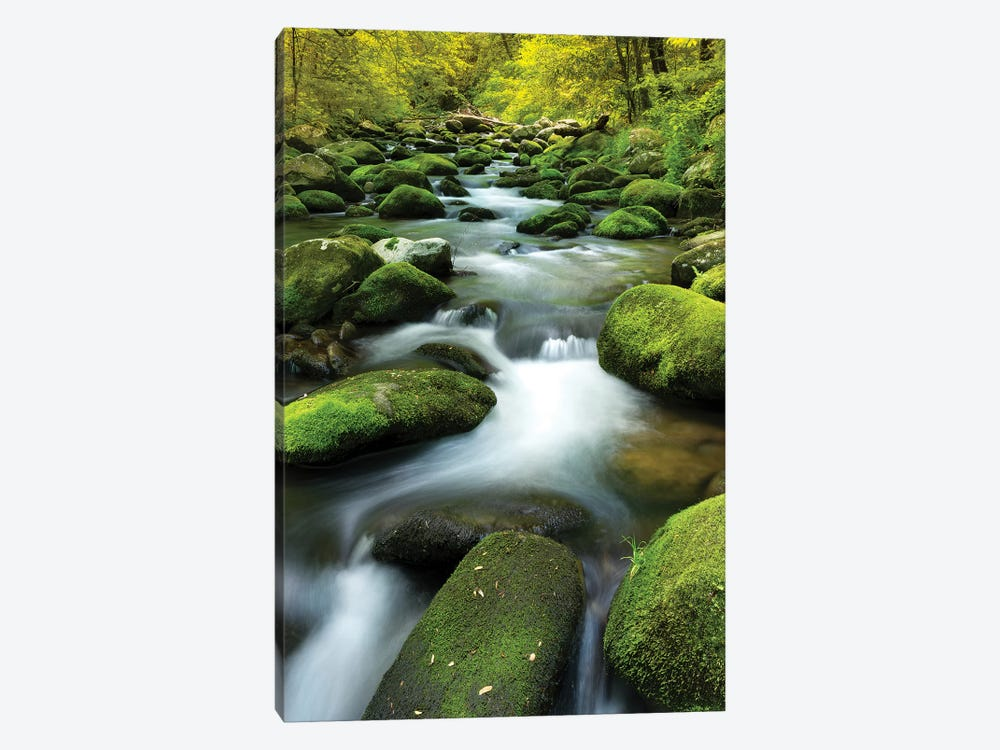 Mountain Stream by Jonathan Ross Photography 1-piece Canvas Art Print