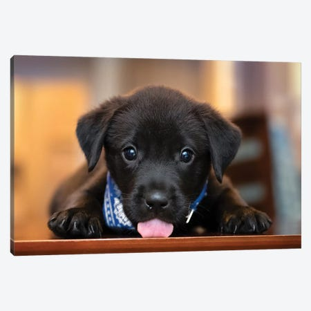 Puppy Love Canvas Print #JRP123} by Jonathan Ross Photography Canvas Print