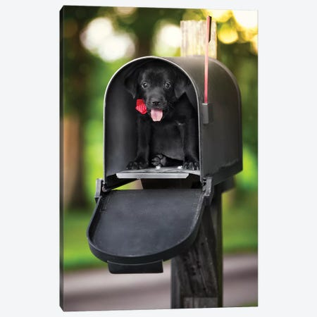Special Puppy Delivery Canvas Print #JRP125} by Jonathan Ross Photography Canvas Art