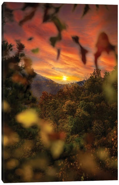 Sunset Through The Trees Canvas Art Print