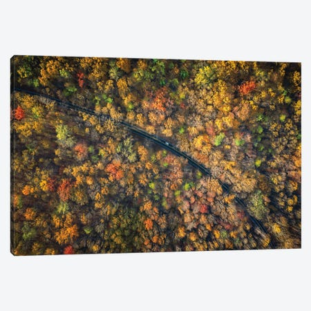 Road Through A Dense Autumn Forest Canvas Print #JRP137} by Jonathan Ross Photography Canvas Print