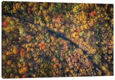 Road Through A Dense Autumn Forest Canvas Art Print