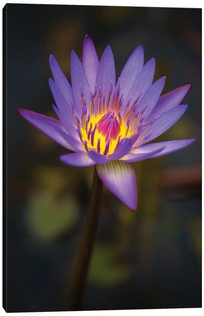 Purple Bloom Canvas Art Print