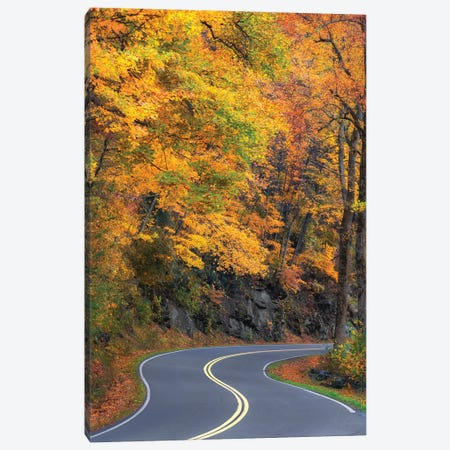 Curvy Road In The Colorful Smokies Canvas Print #JRP167} by Jonathan Ross Photography Canvas Wall Art