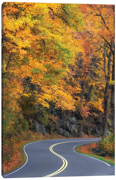 Curvy Road In The Colorful Smokies Canvas Art Print