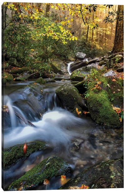 A Soothing Stream Canvas Art Print
