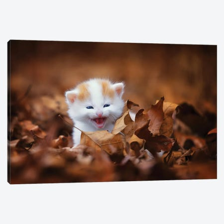 Crying In The Leaves Canvas Print #JRP19} by Jonathan Ross Photography Art Print