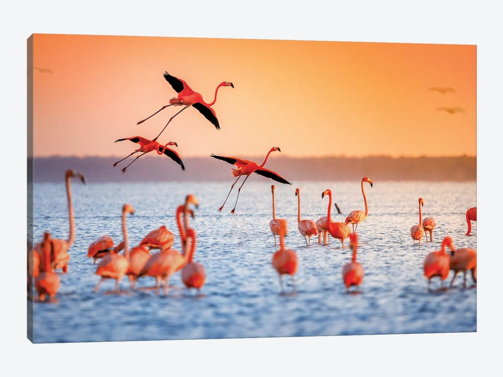 Flamingo Flight by Jonathan Ross Photography 1-piece Canvas Wall Art