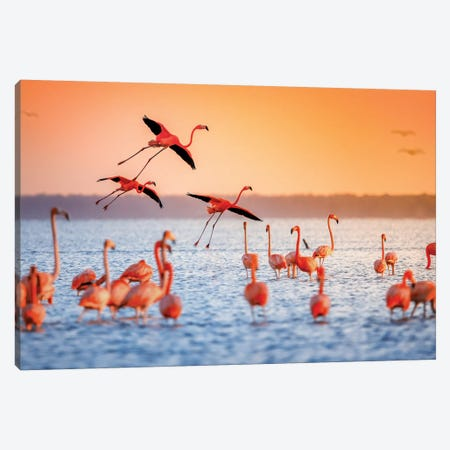 Flamingo Flight Canvas Print #JRP28} by Jonathan Ross Photography Canvas Artwork