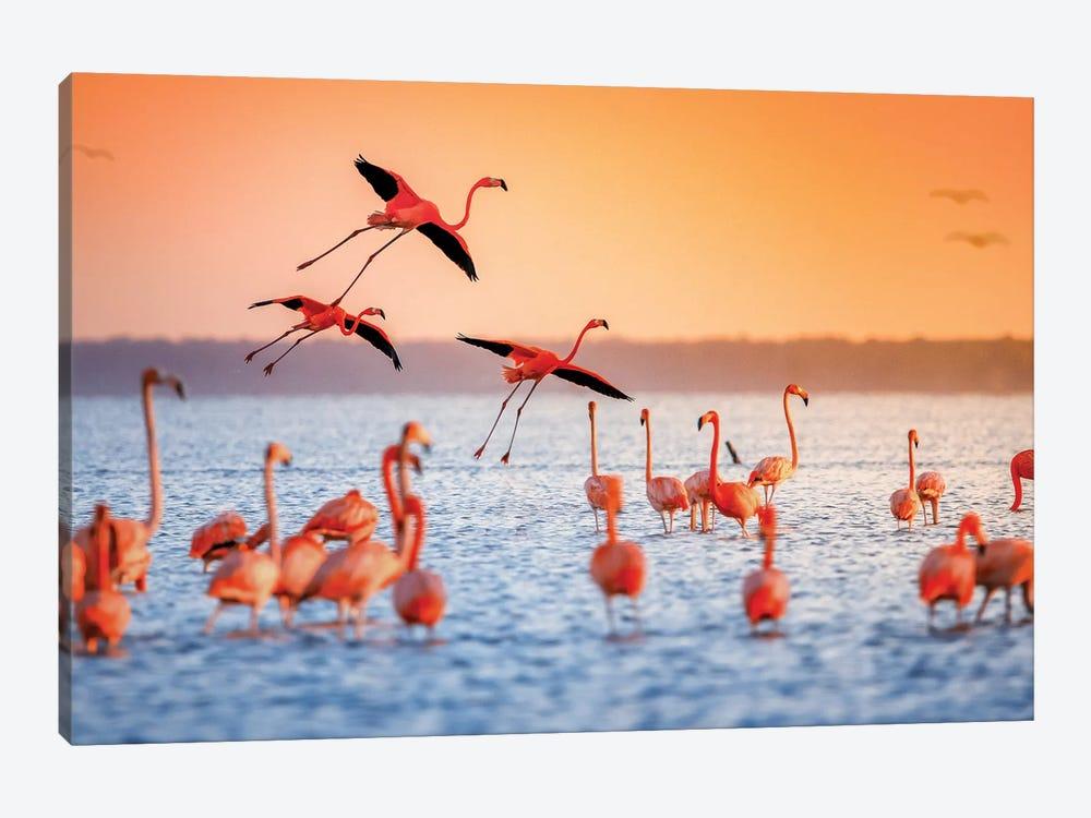 Flamingo Flight by Jonathan Ross Photography 1-piece Canvas Wall Art