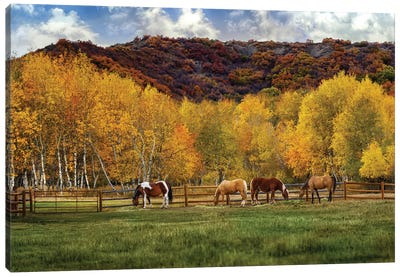 Grazing In The Aspens Canvas Art Print