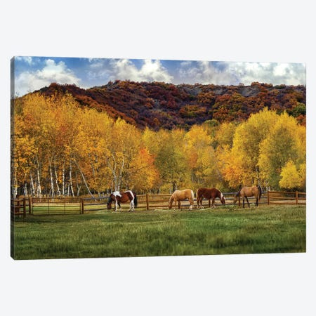 Grazing In The Aspens Canvas Print #JRP31} by Jonathan Ross Photography Canvas Print