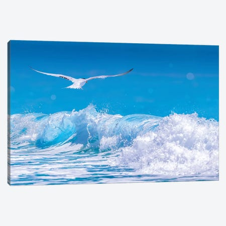 Gull In The Waves 3-Piece Canvas #JRP32} by Jonathan Ross Photography Canvas Art Print