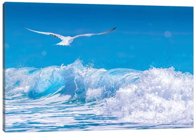 Gull In The Waves Canvas Art Print