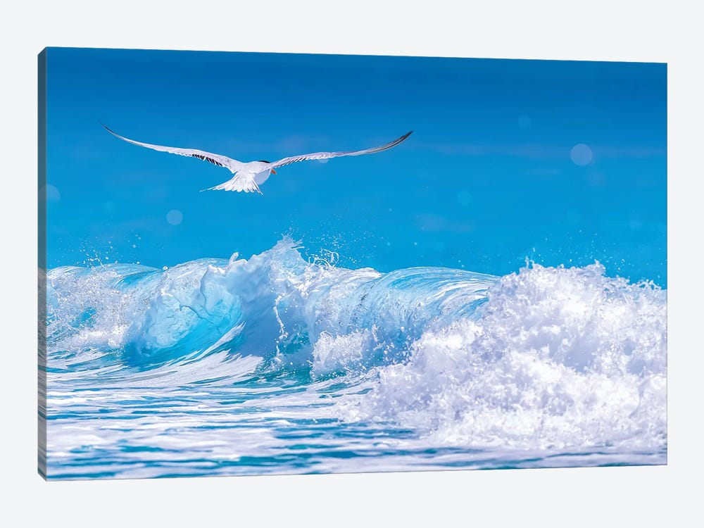 Gull In The Waves by Jonathan Ross Photography 1-piece Canvas Art Print