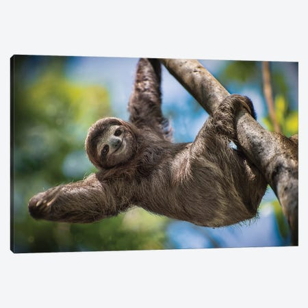 Hanging Out Canvas Print #JRP35} by Jonathan Ross Photography Canvas Art
