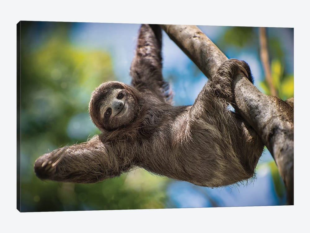 Hanging Out by Jonathan Ross Photography 1-piece Canvas Art