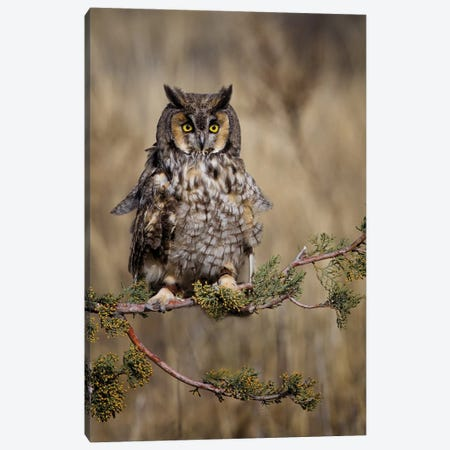 Look Who's There Canvas Print #JRP44} by Jonathan Ross Photography Canvas Print