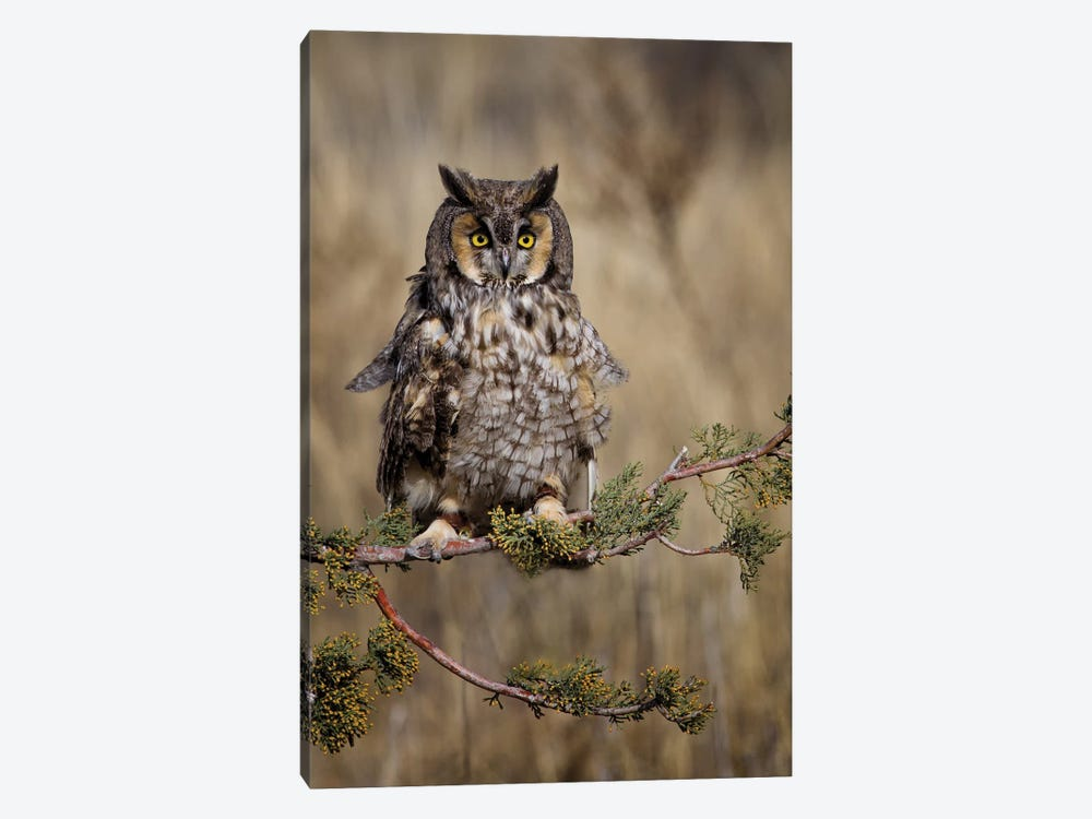 Look Who's There by Jonathan Ross Photography 1-piece Canvas Wall Art
