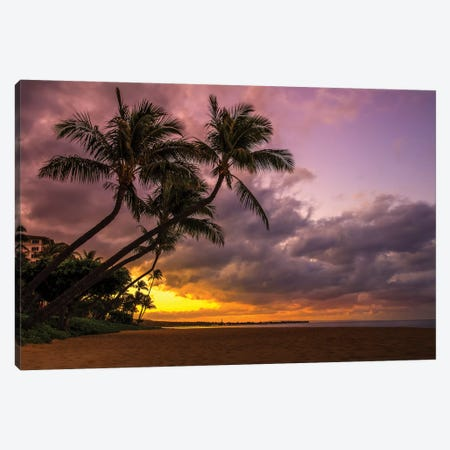 Palms At Sunset Canvas Print #JRP68} by Jonathan Ross Photography Canvas Wall Art