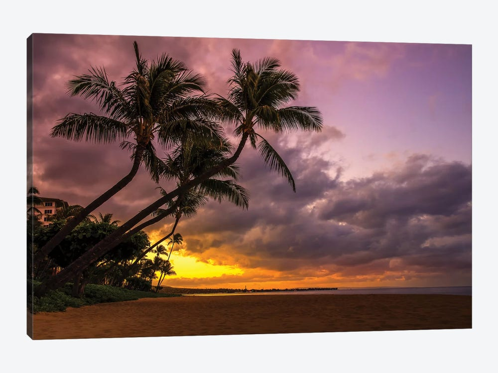 Palms At Sunset by Jonathan Ross Photography 1-piece Canvas Wall Art
