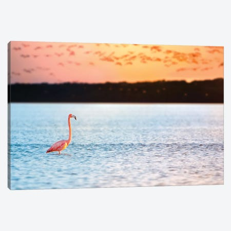 Standing Alone Canvas Print #JRP86} by Jonathan Ross Photography Canvas Art Print