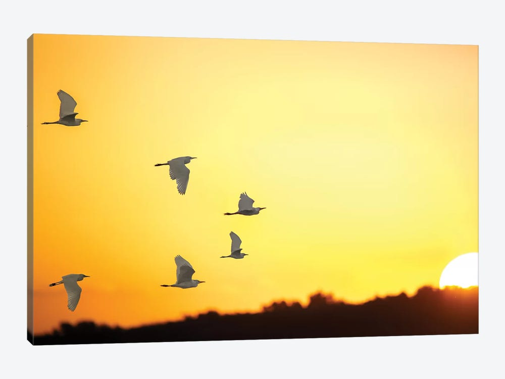 Sunset Formation by Jonathan Ross Photography 1-piece Art Print
