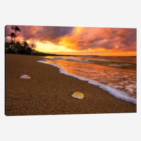 Sunset Seashells Canvas Print #JRP99} by Jonathan Ross Photography Canvas Print