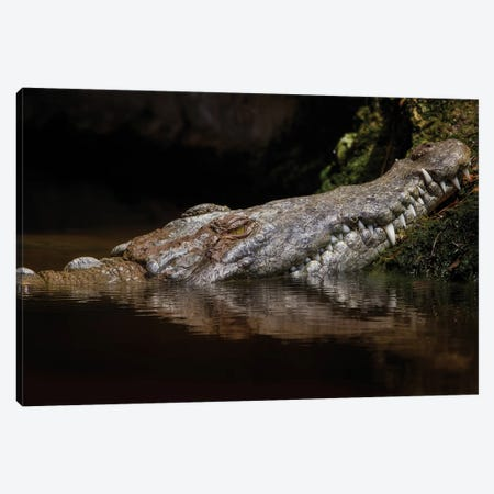 Calico Fall Canvas Print #JRP9} by Jonathan Ross Photography Canvas Art