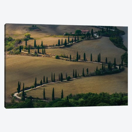 Cypress Alley In Val D'Orcia Canvas Print #JRS17} by Jaroslaw Blaminsky Canvas Art Print