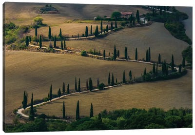 Cypress Alley In Val D'Orcia Canvas Art Print