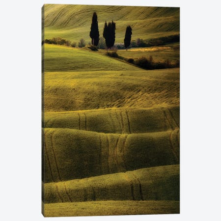Green And Brown Fields Of Toscania Canvas Print #JRS30} by Jaroslaw Blaminsky Canvas Art