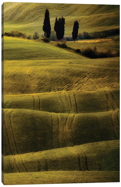 Green And Brown Fields Of Toscania Canvas Art Print