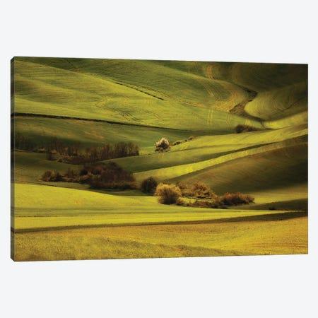 Green Meadows Of Toscania Canvas Print #JRS33} by Jaroslaw Blaminsky Canvas Artwork