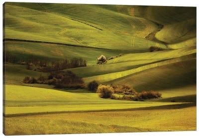 Green Meadows Of Toscania Canvas Art Print