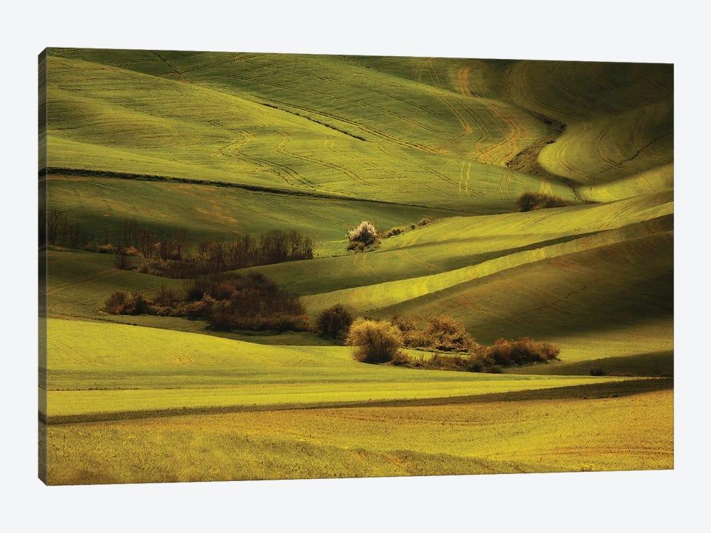 Green Meadows Of Toscania by Jaroslaw Blaminsky 1-piece Canvas Wall Art