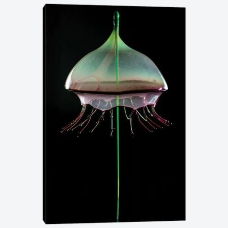 Jellyfish Canvas Print #JRS40} by Jaroslaw Blaminsky Canvas Art Print