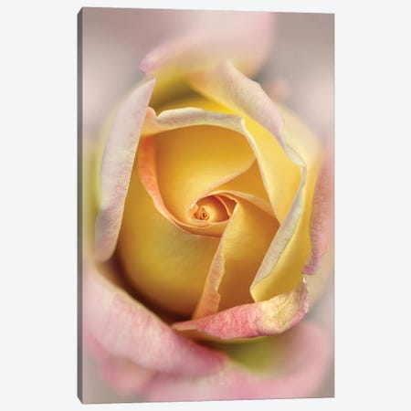 Romance Canvas Print #JRS68} by Jaroslaw Blaminsky Canvas Art Print