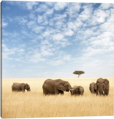 Elephant Group In The Grassland Of The Masai Mara Canvas Art Print