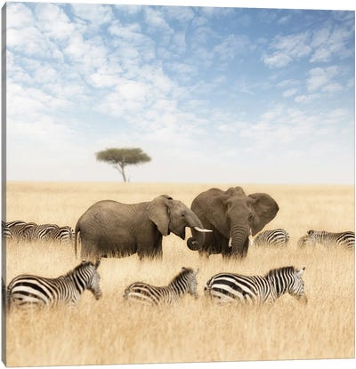 Elephants And Zebras In The Grasslands Of The Masai Mara Canvas Art Print