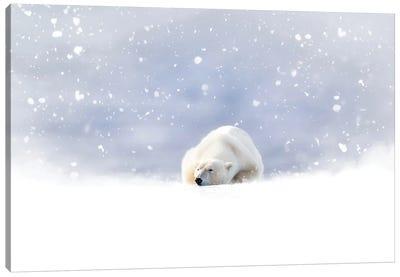 Fantasy Scene Of A Polar Bear In The Snow Canvas Art Print