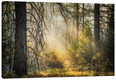 Deep In The Forest, Yosemite Canvas Art Print