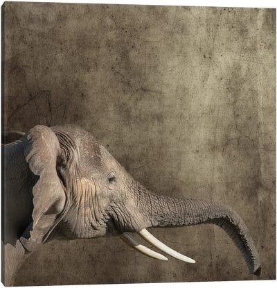 Elephant Portrait, Side View Canvas Art Print