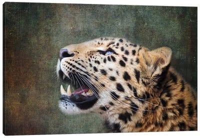 Amur Leopard Portrait Canvas Art Print
