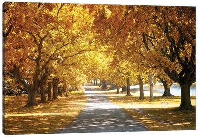 Avenue Of Oak Tree In Autumn Canvas Art Print